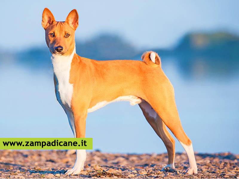 Il Carattere Del Cane Suddiviso Per Razze Canine Dalla A Alla D
