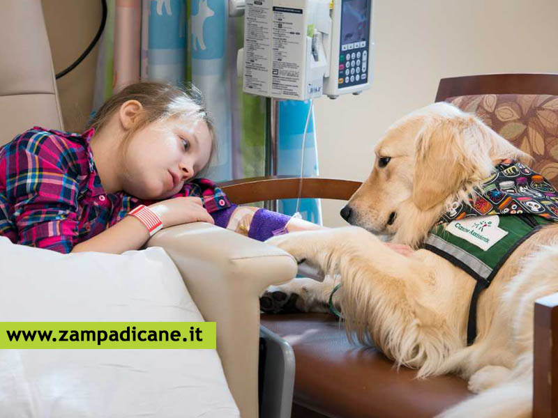 Come diventare un operatore Pet Therapy