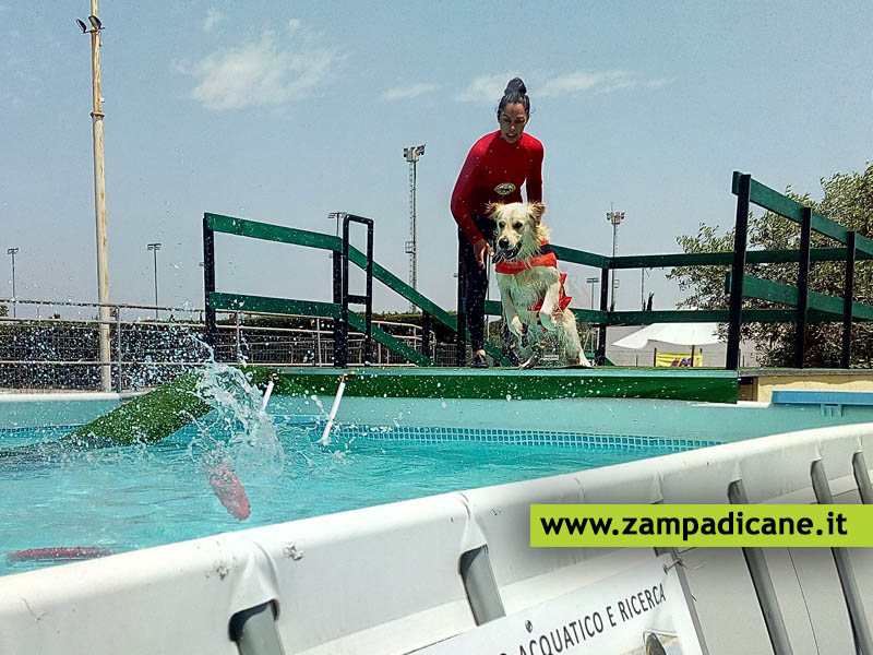 Dog Swim Center, la piscina per i cani