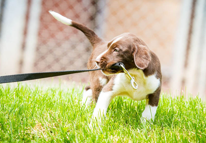 Come insegnare al cucciolo a fare i bisogni fuori - Educare il cane a non salire sul divano ...