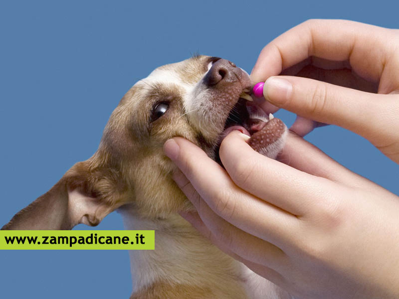 Come somministrare i farmaci ai cani