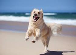 Spiaggia libera per i cani: apre quella del Comune di Albenga Zampa di Cane tutto quello che