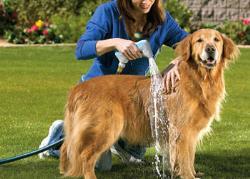 Fare il bagno al cane un 39 azione molto importante zampa di cane tutto quello che c 39 da - Cani che non vogliono fare il bagno ...