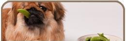 Alimentazione del cane dieta per i cani for Quali verdure possono mangiare i cani